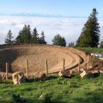 Création d'un étang, Alpage du Suchet